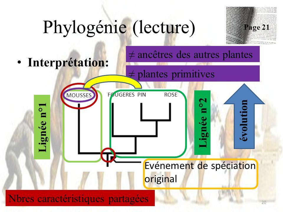 Interprétation: Phylogénie (lecture) 20 Page 21 ROSEPIN MOUSSES FOUGERES Evénement de spéciation original Lignée n°1 Lignée n°2 évolution Nbres caractéristiques partagées ancêtres des autres plantes plantes primitives