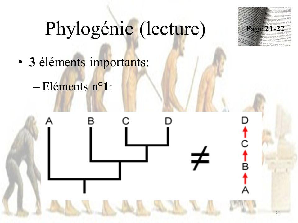 Phylogénie (lecture) 21 3 éléments importants: – Eléments n°1: Page 21-22