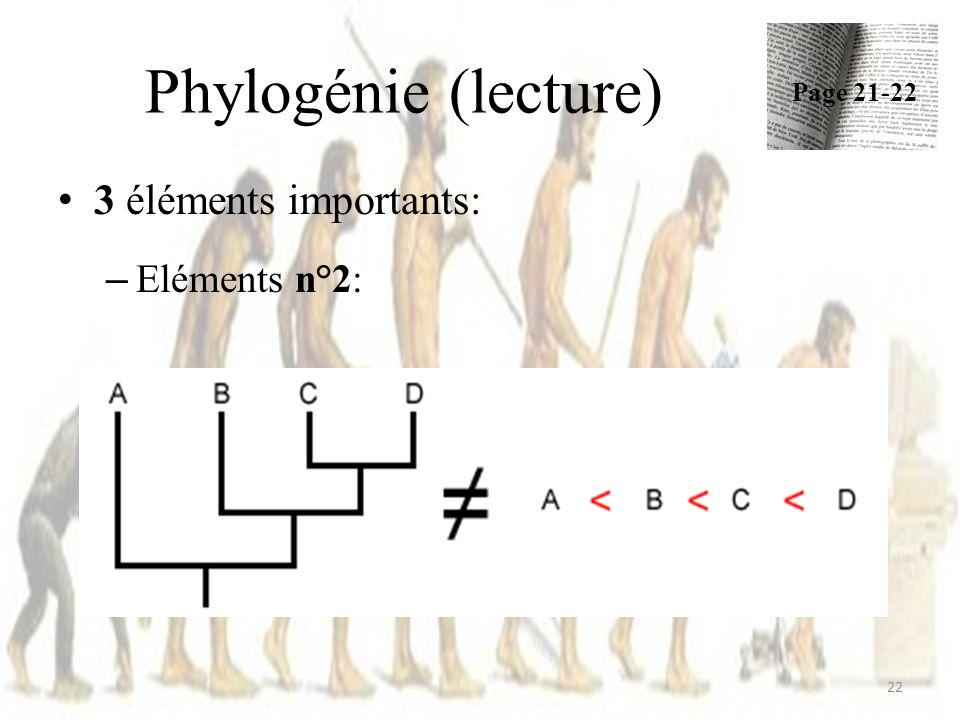 Phylogénie (lecture) 22 3 éléments importants: – Eléments n°2: Page 21-22