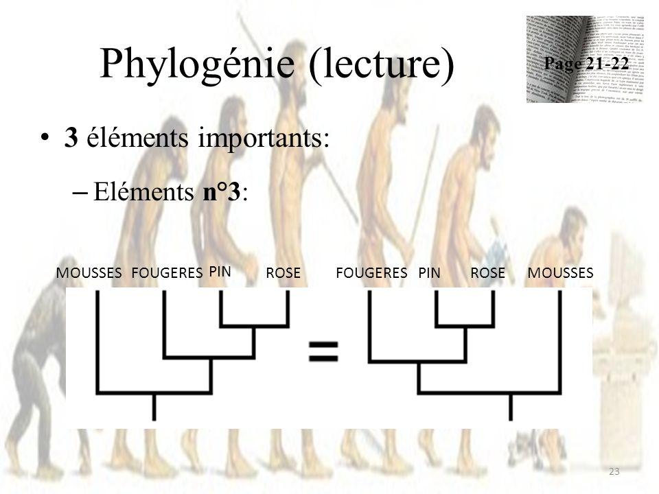 Phylogénie (lecture) 23 3 éléments importants: – Eléments n°3: Page 21-22 ROSE PIN MOUSSESFOUGERESROSEPINMOUSSESFOUGERES
