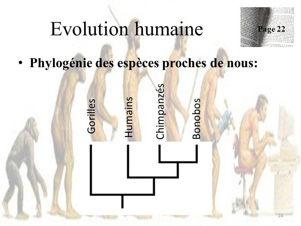 Evolution humaine 24 Phylogénie des espèces proches de nous: Page 22 Gorilles Humains Chimpanzés Bonobos