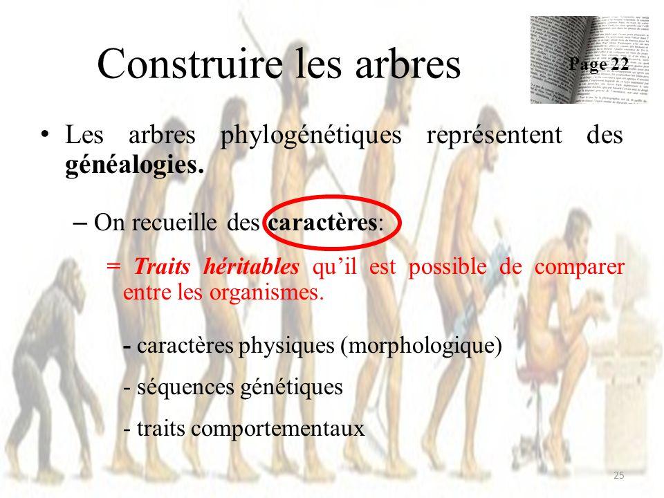 Construire les arbres 25 Les arbres phylogénétiques représentent des généalogies.