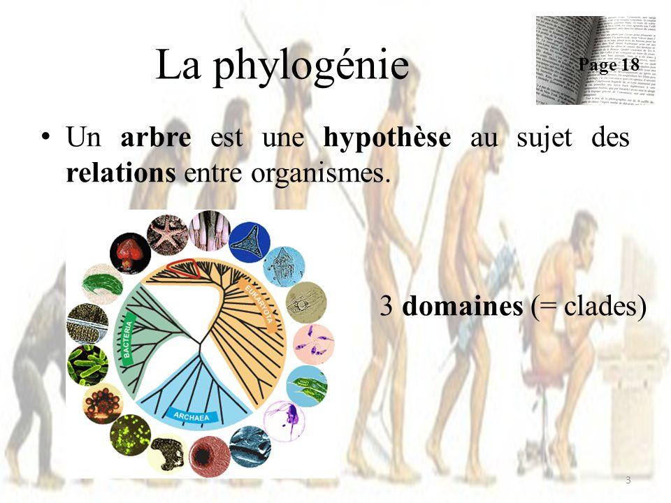 Un arbre est une hypothèse au sujet des relations entre organismes.