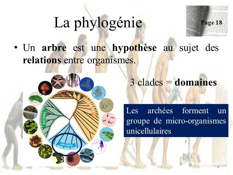 Définition : = Un clade est un groupe monophylétique d organismes vivants ou ayant vécu comprenant un organisme particulier et l entièreté de ses descendants.