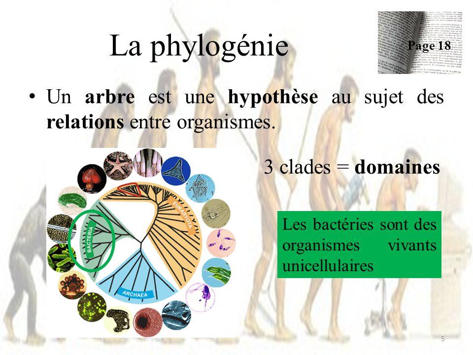 Phylogénie des vertébrés 26 Page 17