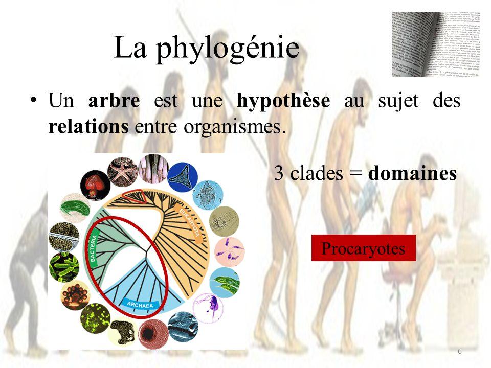 Imbriqués les uns dans les autres (hiérarchie) Un clade peut inclure plusieurs milliers despèces ou seulement quelques-unes.