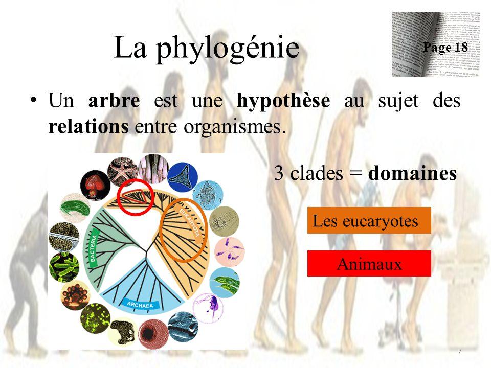 Echelle ou branches Phylogénie 18 Page 21