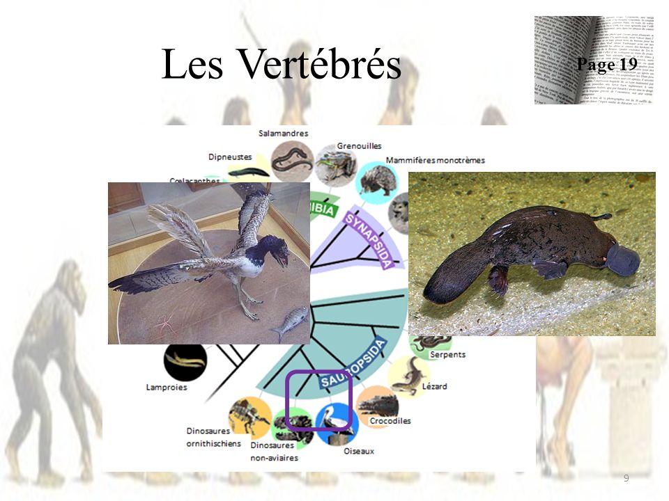 Caractère dérivé / ancestral = Caractère qui a évolué dans une lignée clade monophylétique et qui sépare ses membres dautres individus = une synapomorphie Exemple: – Les plumes des oiseaux 40 Page 24-25 Une synapomorphie est une homologie