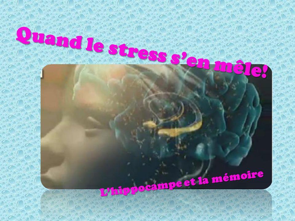 Quand le stress sen mêle! Lhippocampe et la mémoire