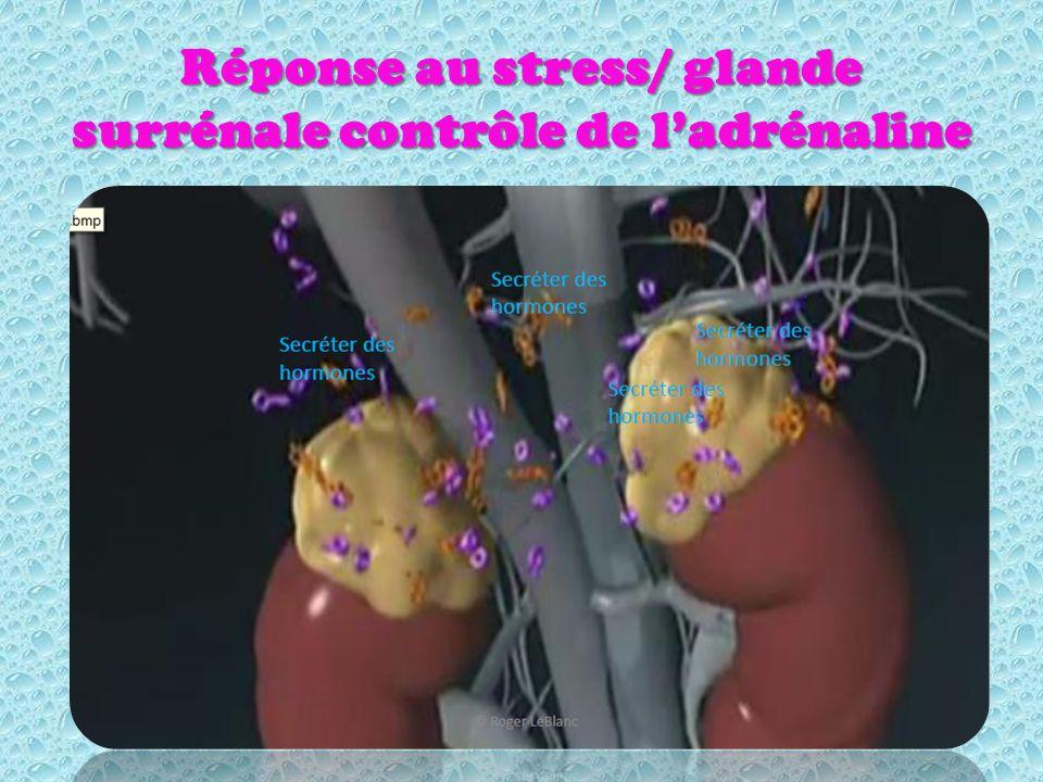 Réponse au stress/ glande surrénale contrôle de ladrénaline