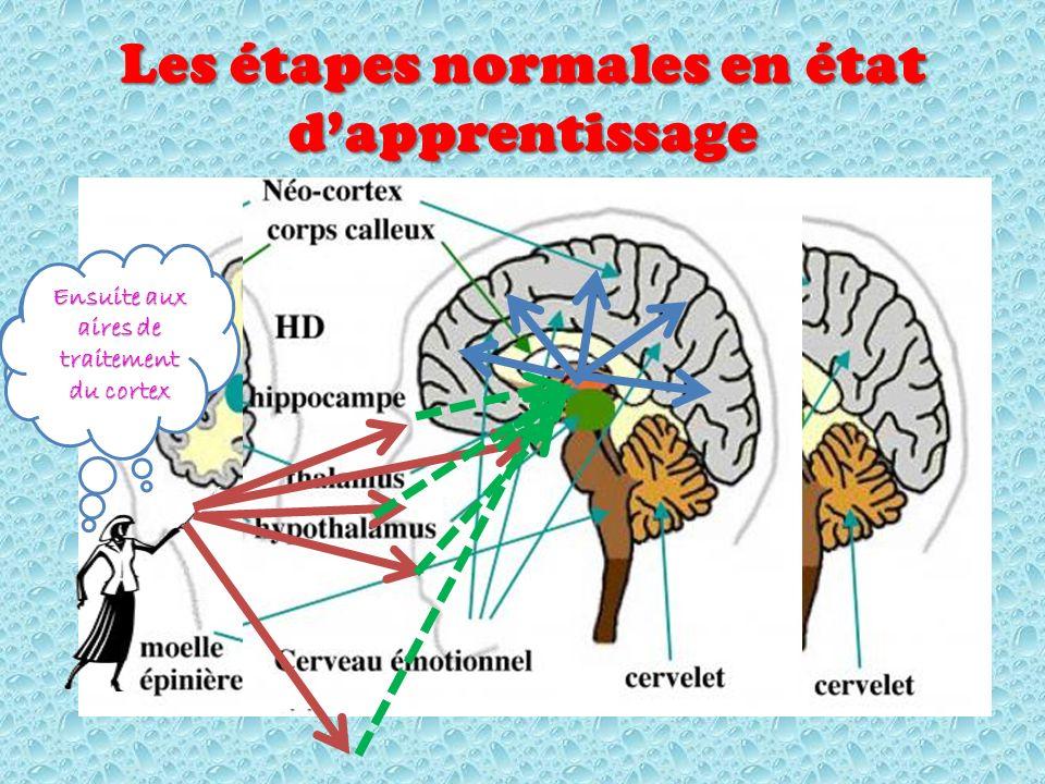 Les étapes normales en état dapprentissage Les sens perçoivent et envoient vers le thalamus Ensuite aux aires de traitement du cortex