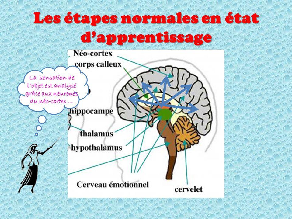 Les étapes normales en état dapprentissage La sensation de lobjet est analysé grâce aux neurones du néo-cortex …