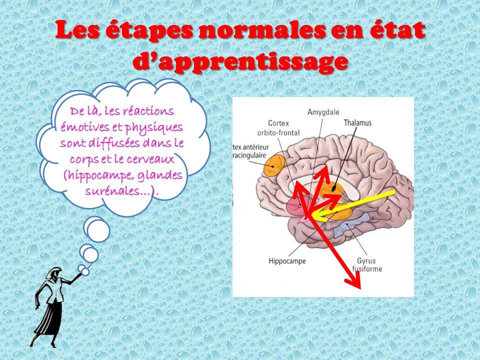 Selon la région qui analyse dans le cortex (celui visuel par exemple), linformation se rend à lamygdale Les étapes normales en état dapprentissage De là, les réactions émotives et physiques sont diffusées dans le corps et le cerveaux (hippocampe, glandes surénales…).
