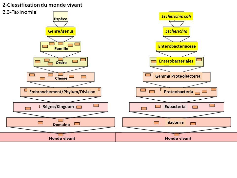 Règne/Kingdom Embranchement/Phylum/Division Genre/genus Eubacteria Proteobacteria Escherichia Bacteria Gamma Proteobacteria Enterobacteriales Enteroba