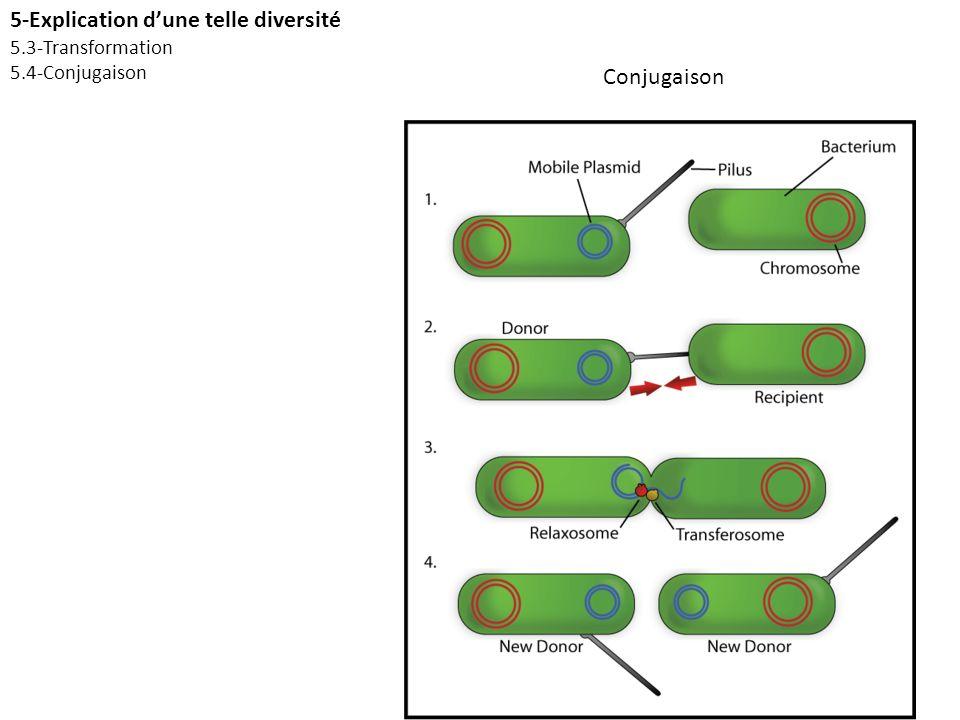 Conjugaison 5-Explication dune telle diversité 5.3-Transformation 5.4-Conjugaison