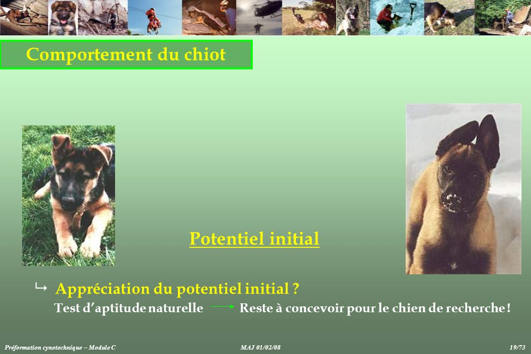 Comportement du chiot Potentiel initial Appréciation du potentiel initial ? Test daptitude naturelle Reste à concevoir pour le chien de recherche ! Pr