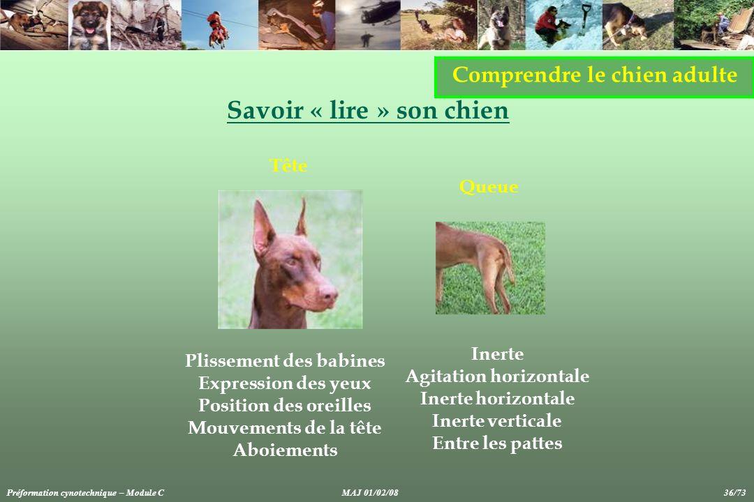 Savoir « lire » son chien Comprendre le chien adulte Plissement des babines Expression des yeux Position des oreilles Mouvements de la tête Aboiements