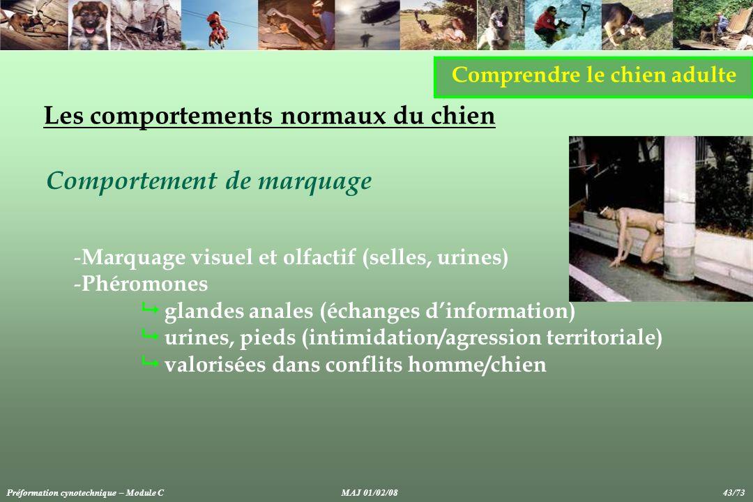 Comprendre le chien adulte Les comportements normaux du chien Comportement de marquage - Marquage visuel et olfactif (selles, urines) - Phéromones gla