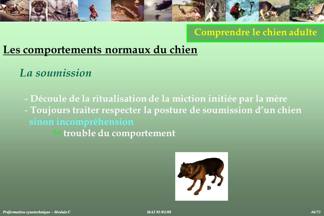 Comprendre le chien adulte Les comportements normaux du chien La soumission - Découle de la ritualisation de la miction initiée par la mère - Toujours