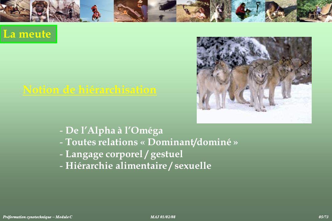 La meute Notion de hiérarchisation - De lAlpha à lOméga - Toutes relations « Dominant/dominé » - Langage corporel / gestuel - Hiérarchie alimentaire /