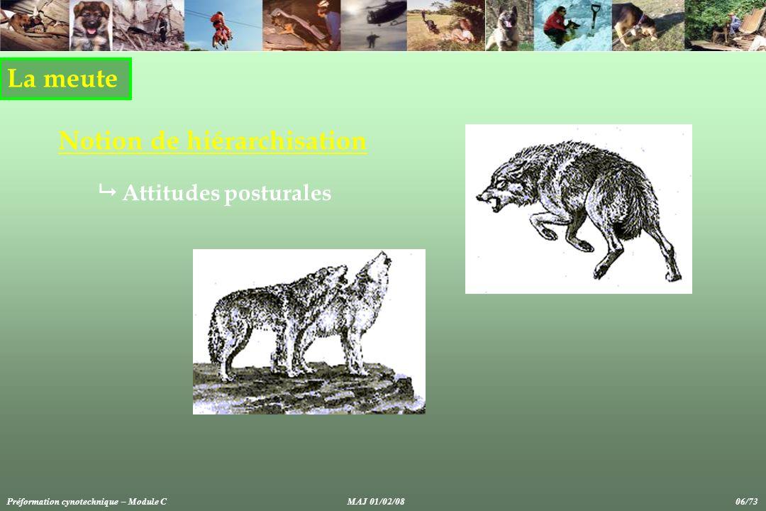 Anomalies et troubles du comportement Manifestations physiques et comportementales du stress chez le chien de sport et utilité Préformation cynotechnique – Module CMAJ 01/02/08 57/73