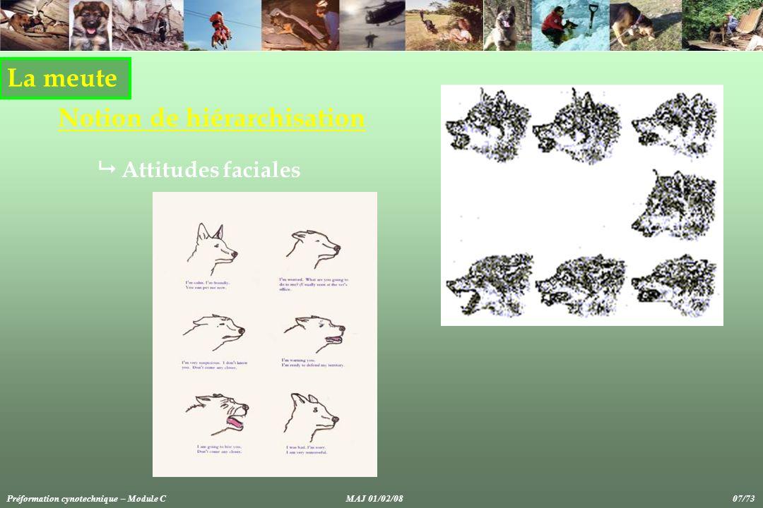 La meute Notion de hiérarchisation Attitudes faciales Préformation cynotechnique – Module CMAJ 01/02/08 07/73