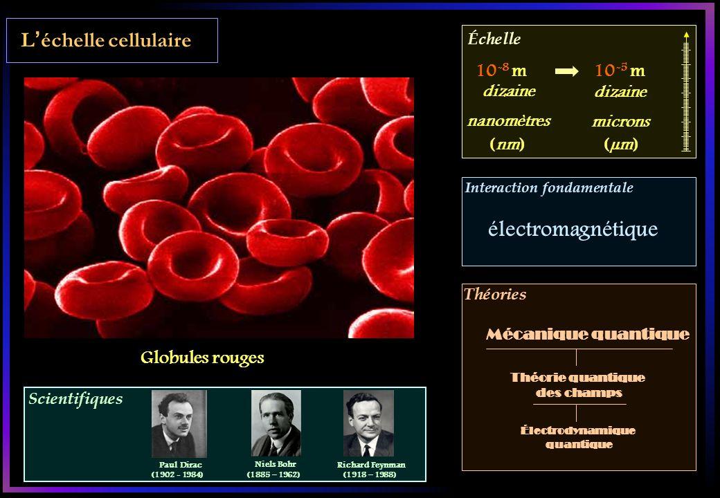 Scientifiques Échelle Interaction fondamentale Théories Léchelle cellulaire Globules rouges 10 -8 m10 -5 m Théorie quantique des champs Mécanique quantique dizaine microns dizaine nanomètres (µm)(nm) électromagnétique Électrodynamique quantique Paul Dirac (1902 - 1984) Niels Bohr (1885 – 1962) Richard Feynman (1918 – 1988)