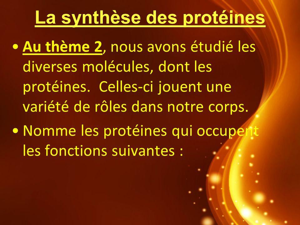 La synthèse des protéines Au thème 2, nous avons étudié les diverses molécules, dont les protéines. Celles-ci jouent une variété de rôles dans notre c