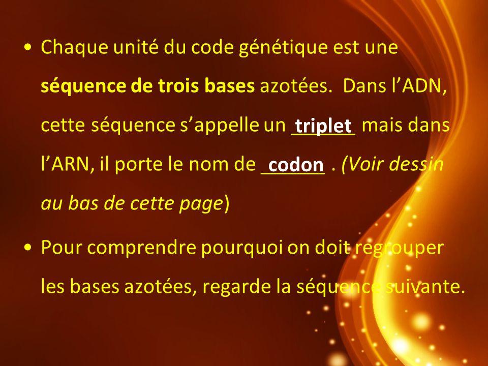 Chaque unité du code génétique est une séquence de trois bases azotées. Dans lADN, cette séquence sappelle un ______ mais dans lARN, il porte le nom d