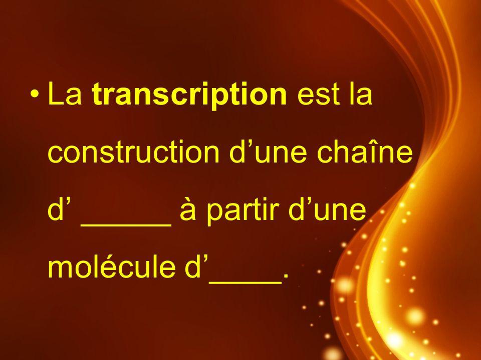 La transcription est la construction dune chaîne d _____ à partir dune molécule d____.