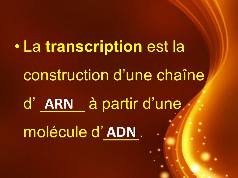 ARN ADN