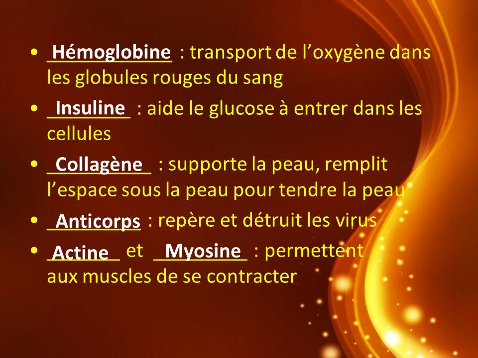 ____________ : transport de loxygène dans les globules rouges du sang ________ : aide le glucose à entrer dans les cellules __________ : supporte la p