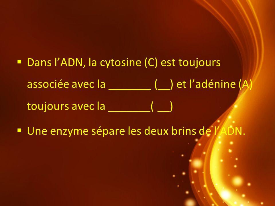Dans lADN, la cytosine (C) est toujours associée avec la _______ (__) et ladénine (A) toujours avec la _______( __) Une enzyme sépare les deux brins d