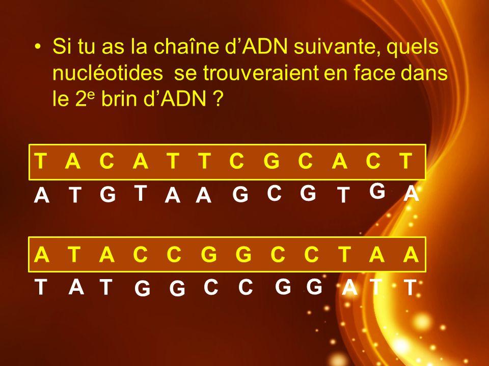 Si tu as la chaîne dADN suivante, quels nucléotides se trouveraient en face dans le 2 e brin dADN ? T A C A T T C G C A C T A T A C C G G C C T A A AA