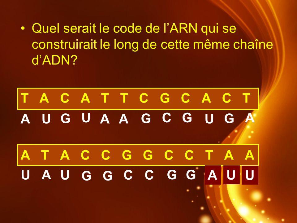 Quel serait le code de lARN qui se construirait le long de cette même chaîne dADN? T A C A T T C G C A C T A T A C C G G C C T A A AAA A A A U U U U U