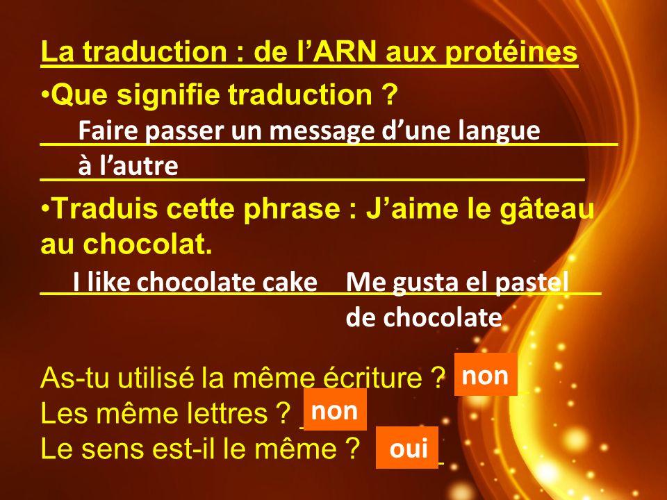 La traduction : de lARN aux protéines Que signifie traduction ? ___________________________________ _________________________________ Traduis cette ph