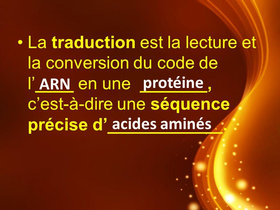 La traduction est la lecture et la conversion du code de l____ en une _______, cest-à-dire une séquence précise d____________. ARN protéine acides ami