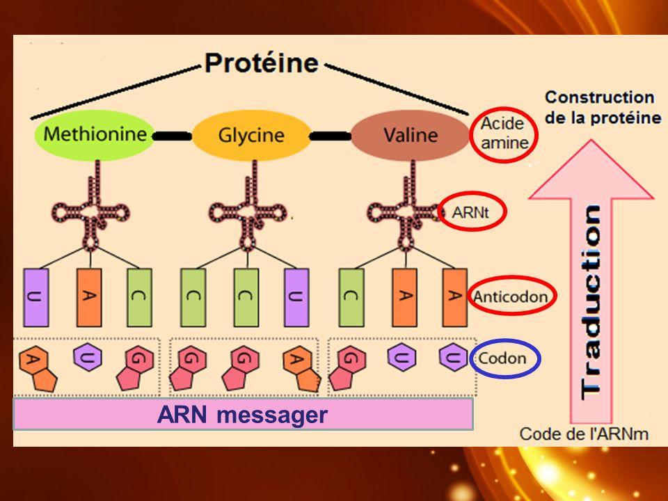 ARN messager