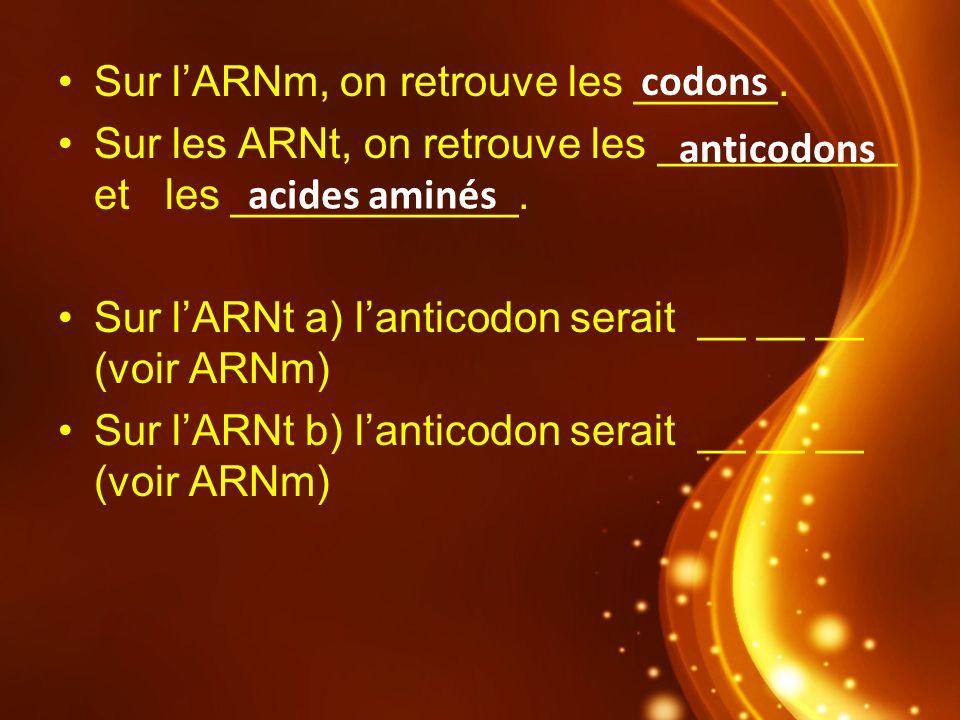 Sur lARNm, on retrouve les ______. Sur les ARNt, on retrouve les __________ et les ____________. Sur lARNt a) lanticodon serait __ __ __ (voir ARNm) S