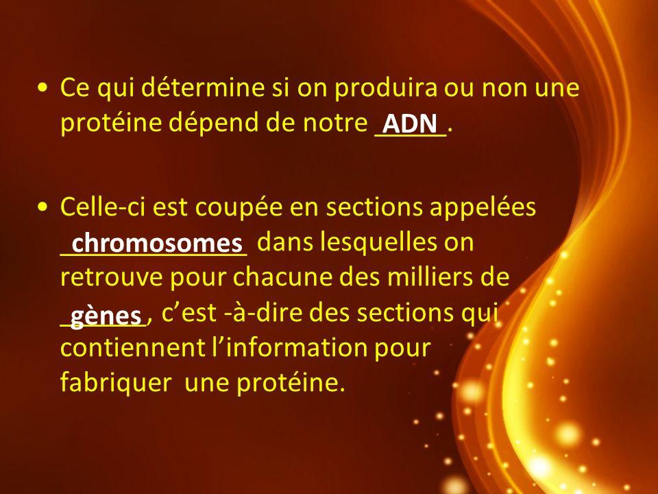 Ce qui détermine si on produira ou non une protéine dépend de notre _____. Celle-ci est coupée en sections appelées _____________ dans lesquelles on r