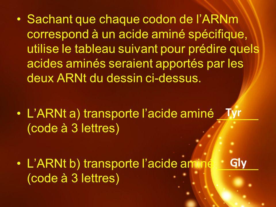 Sachant que chaque codon de lARNm correspond à un acide aminé spécifique, utilise le tableau suivant pour prédire quels acides aminés seraient apporté