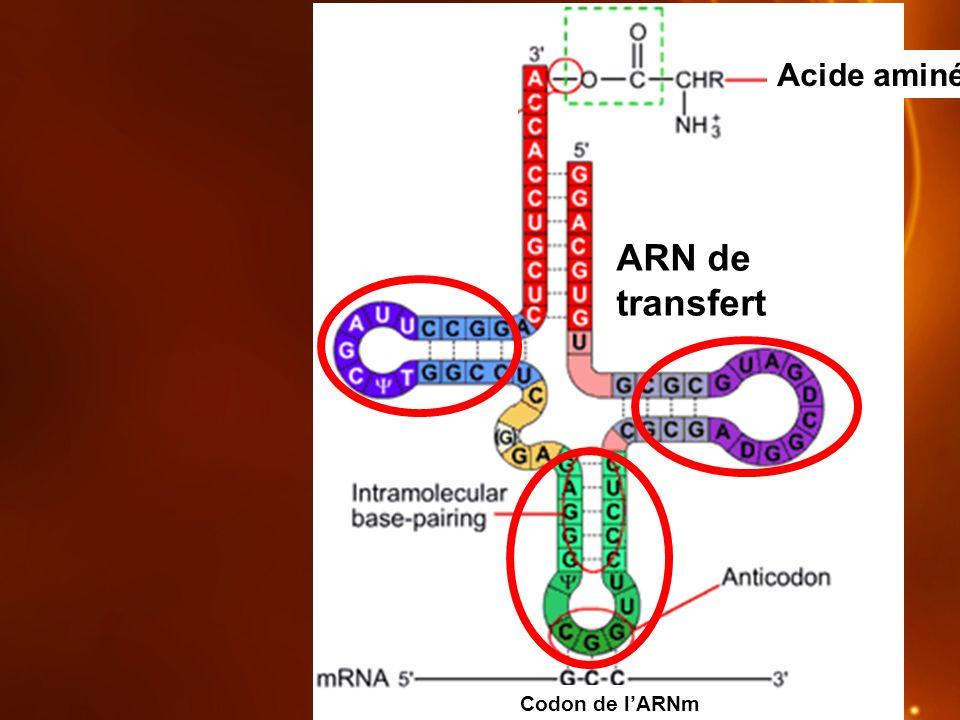 ARN de transfert Acide aminé Codon de lARNm