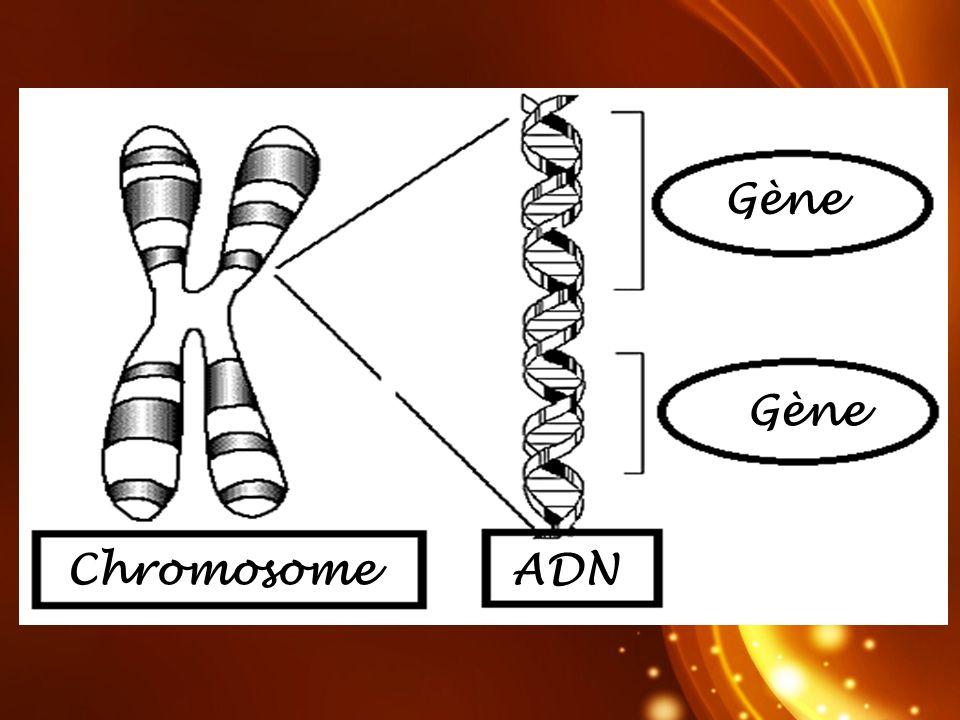 Codons Protéine