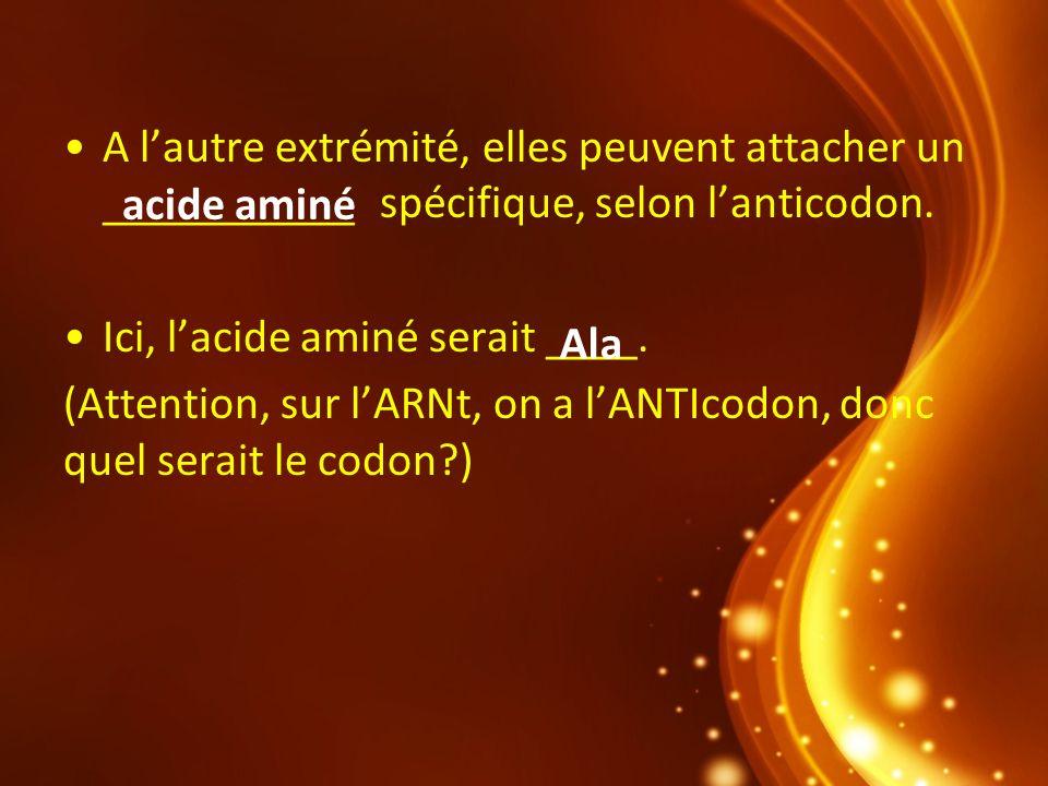 A lautre extrémité, elles peuvent attacher un ___________ spécifique, selon lanticodon. Ici, lacide aminé serait ____. (Attention, sur lARNt, on a lAN