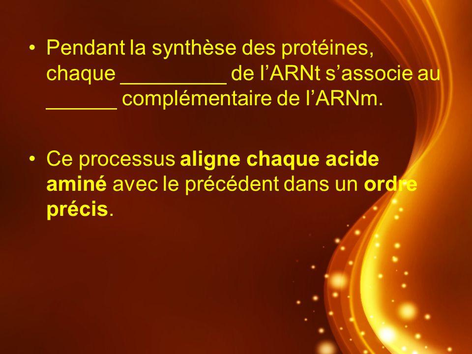 Pendant la synthèse des protéines, chaque _________ de lARNt sassocie au ______ complémentaire de lARNm. Ce processus aligne chaque acide aminé avec l