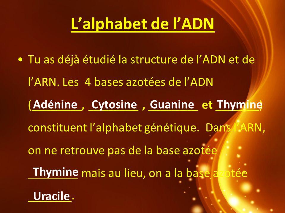 Lalphabet de lADN Tu as déjà étudié la structure de lADN et de lARN. Les 4 bases azotées de lADN (________, ________, ________ et _______) constituent
