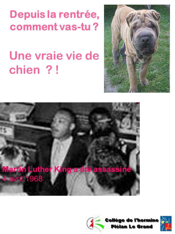 Depuis la rentrée, comment vas-tu ? Martin Luther King a été assassiné 4 avril 1968 Une vraie vie de chien ? !