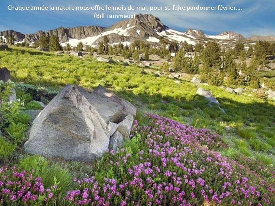 La nature est un professeur universel et sûr, pour celui qui lobserve… (Carlo Goldoni)