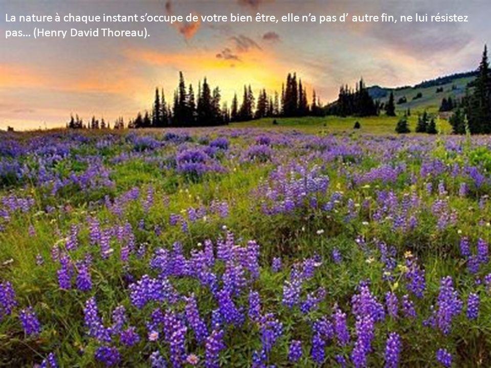 La nature à chaque instant soccupe de votre bien être, elle na pas d autre fin, ne lui résistez pas… (Henry David Thoreau).