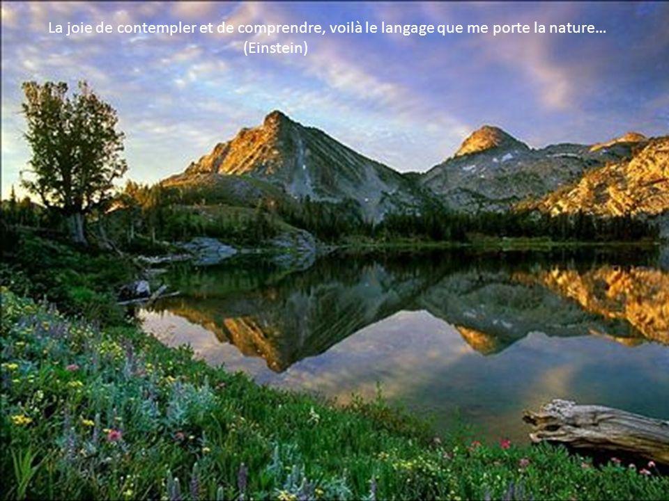 La joie de contempler et de comprendre, voilà le langage que me porte la nature… (Einstein)
